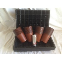 10 x SEED TRAYS + 10 x 40 CELL SEED TRAY INSERTS + 50 x 9CM PLANT POTS & LABELS